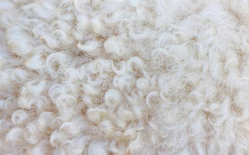 Is wool an anti-allergen?