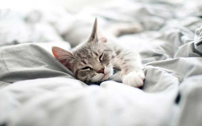 Are weighted blankets safe for pets?